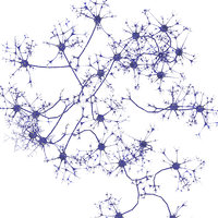 3D neurons model