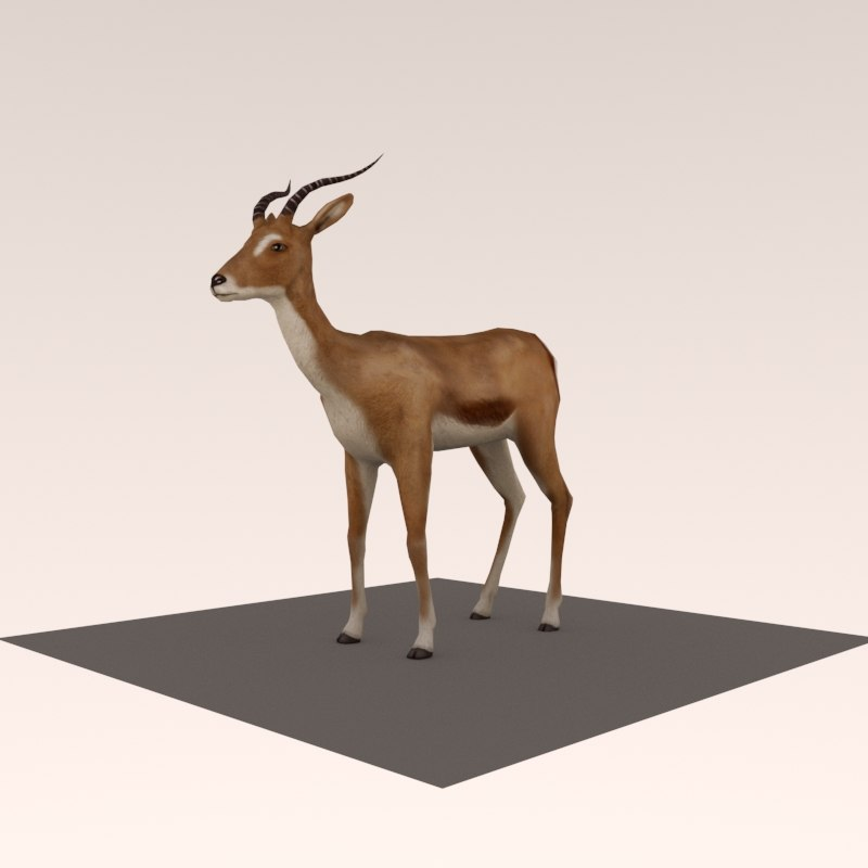 antelope rigged animate 3D