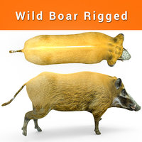 3D wild boar rigged model