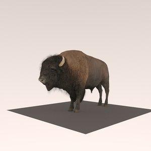 bison nature 3D model