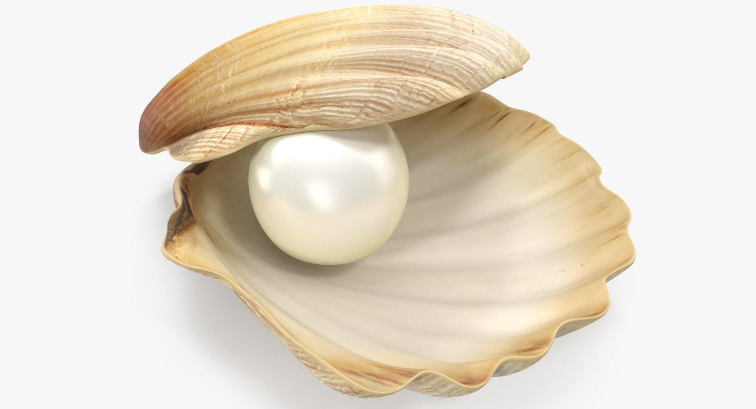 pearl shell 3D model