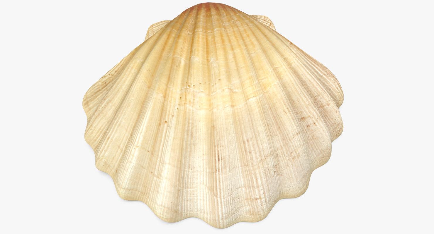 3D sea shell 2 model