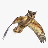 great horned owl 3D model
