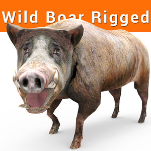 3D wild boar rigged