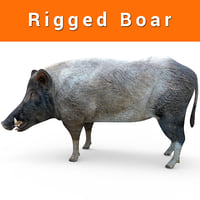 3D wild boar rigged ready model