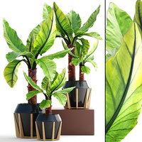 tropical plant typhonodorum lindleyanum model