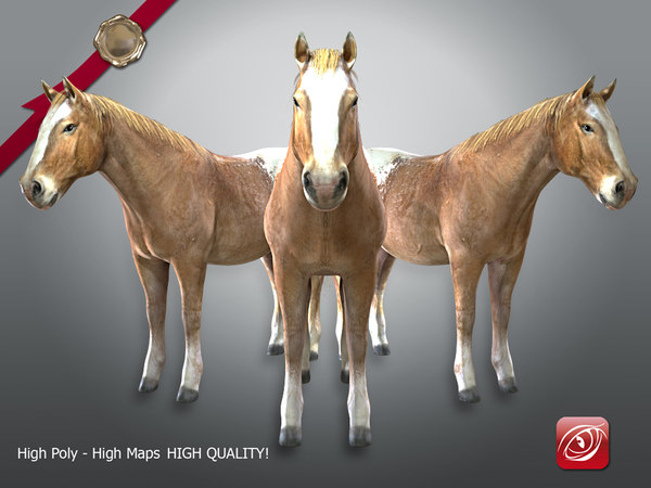 horse male tpose 3D model