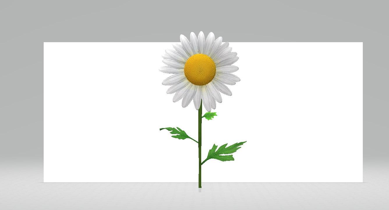 3D daisy model