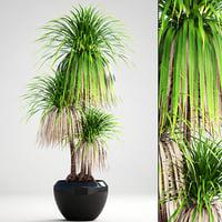 3D model dracaena palm