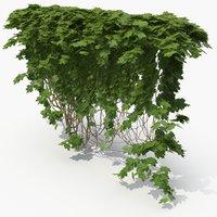 3D ivy plant nature