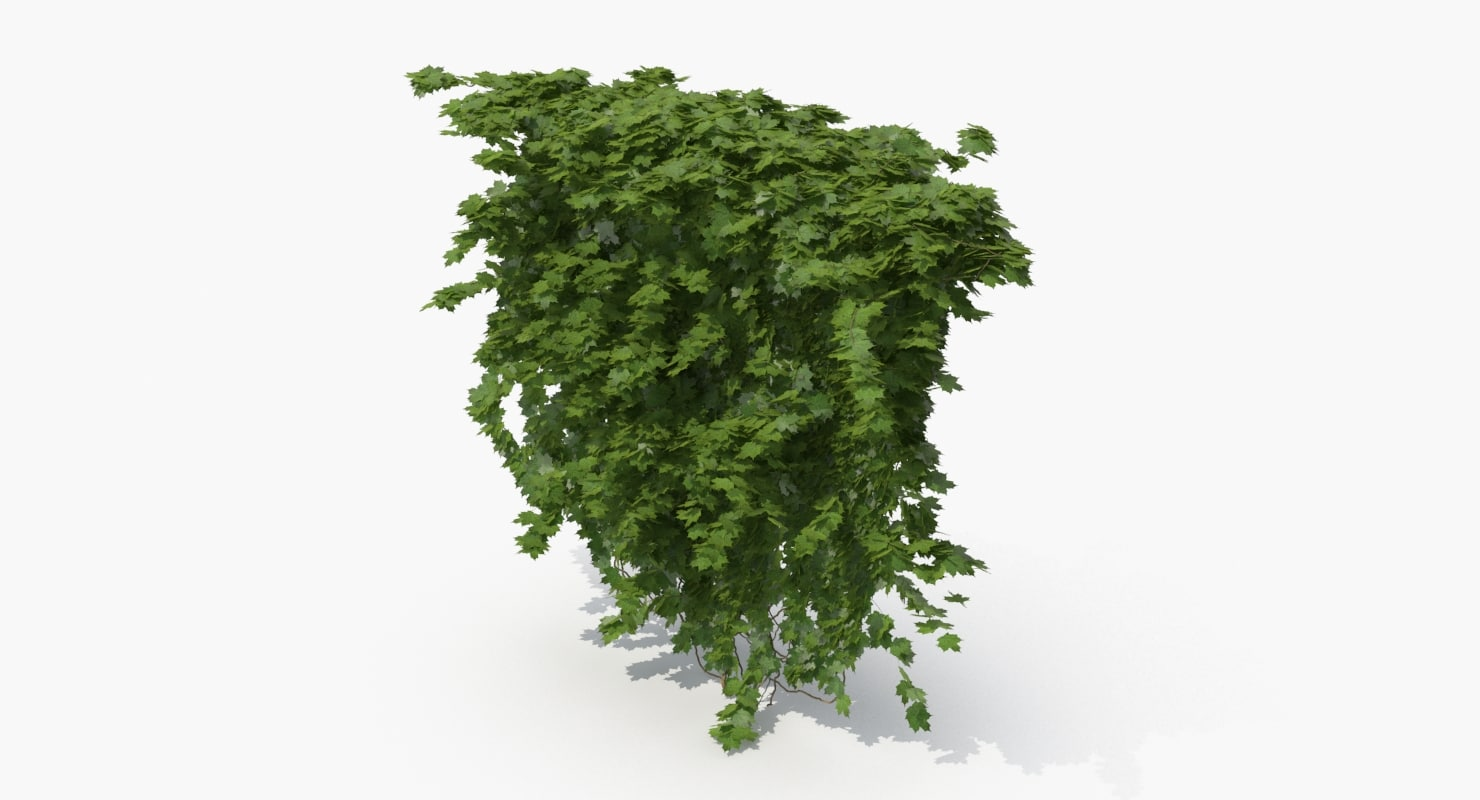ivy plant nature 3D model