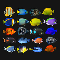 Fish Megapack Collection Lowpoly