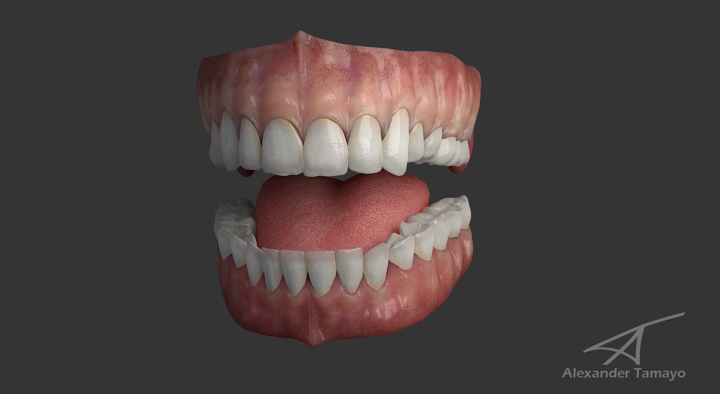 3D model teeth gums tongue
