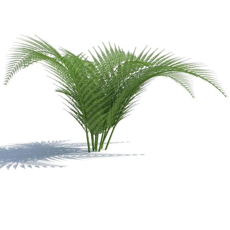 3D fern wind