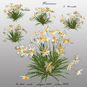 3D flowers narcissus