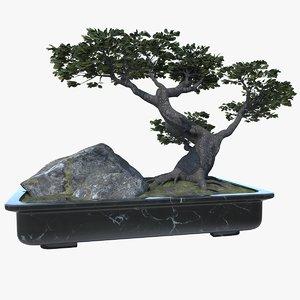 japan bonsai 3D model