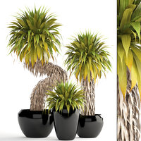 Collection of tropical plants Yucca