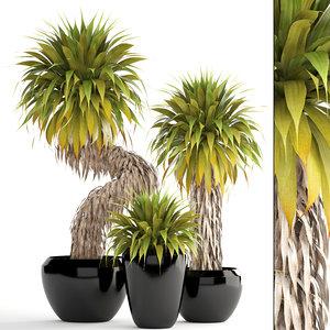tropical plants yucca 3D model
