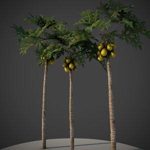plant papaya animation 3D