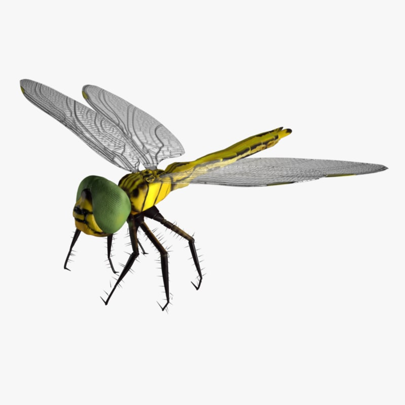 dragonfly wings model