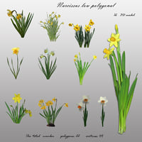 flowers narcissus polygons 3D