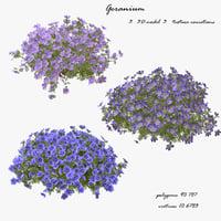 3D model Geranium Flowers