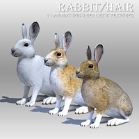 3D rabbit hair animations model