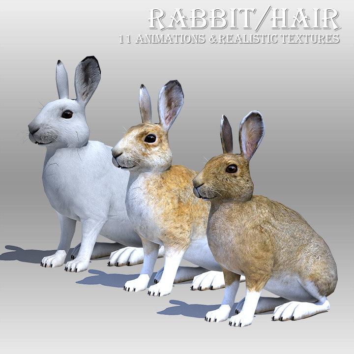 3D rabbit hair animations model
