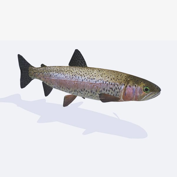 realistic trout fish model