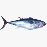 tuna fish animation 3D