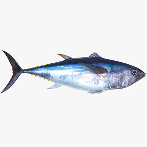 tuna fish animation 3D