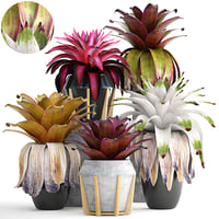Tropical plant shrubs Bromelia