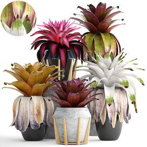 3D tropical plant shrubs bromelia