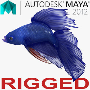 blue betta fish rigged 3D model