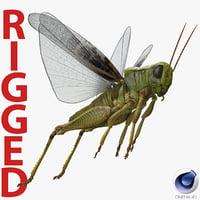 Grasshopper Rigged for Cinema 4D