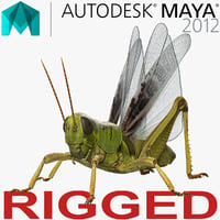 3D grasshopper rigged