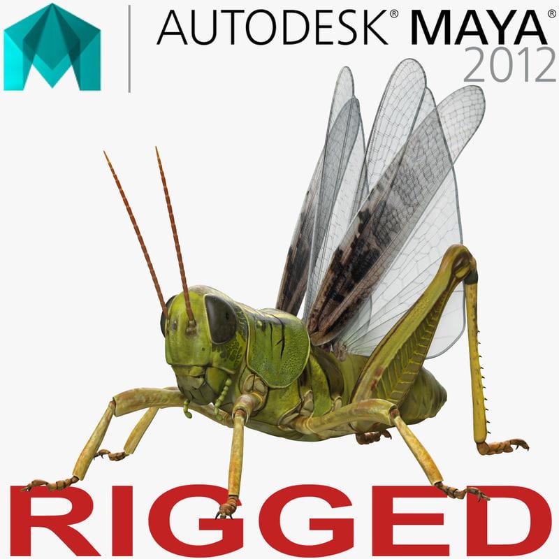 3D grasshopper rigged