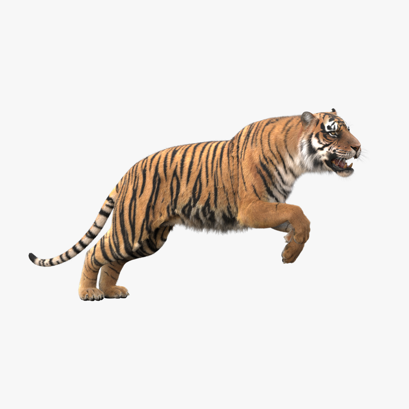 3D realistic tiger fur animation model