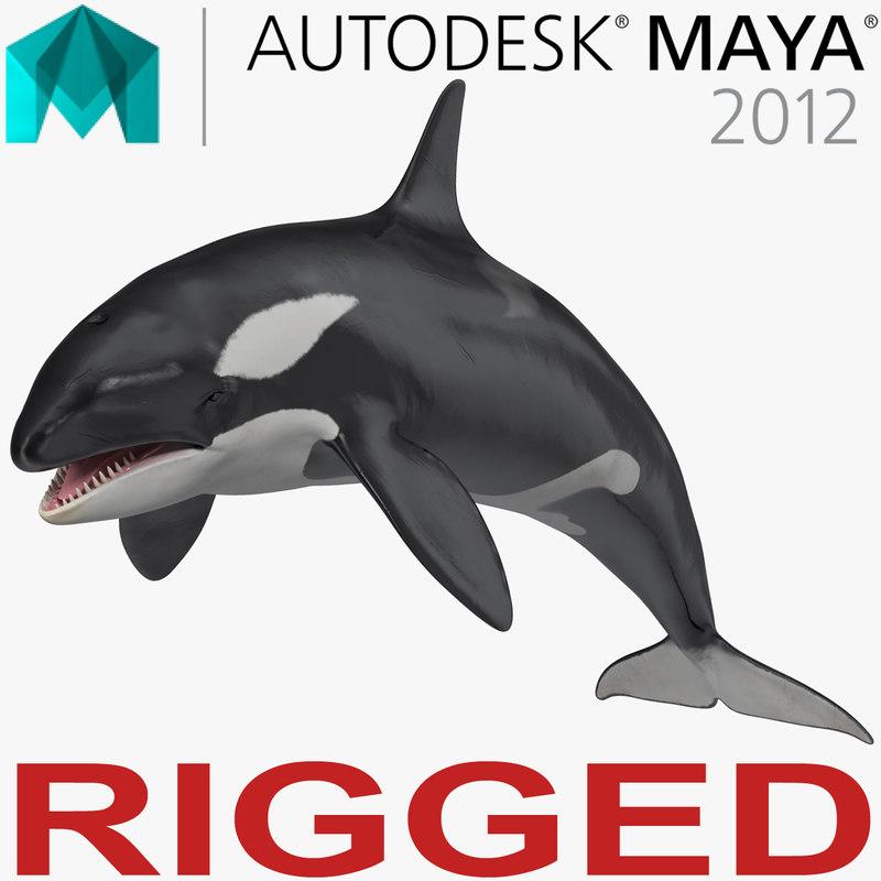 3D model killer whale rigged