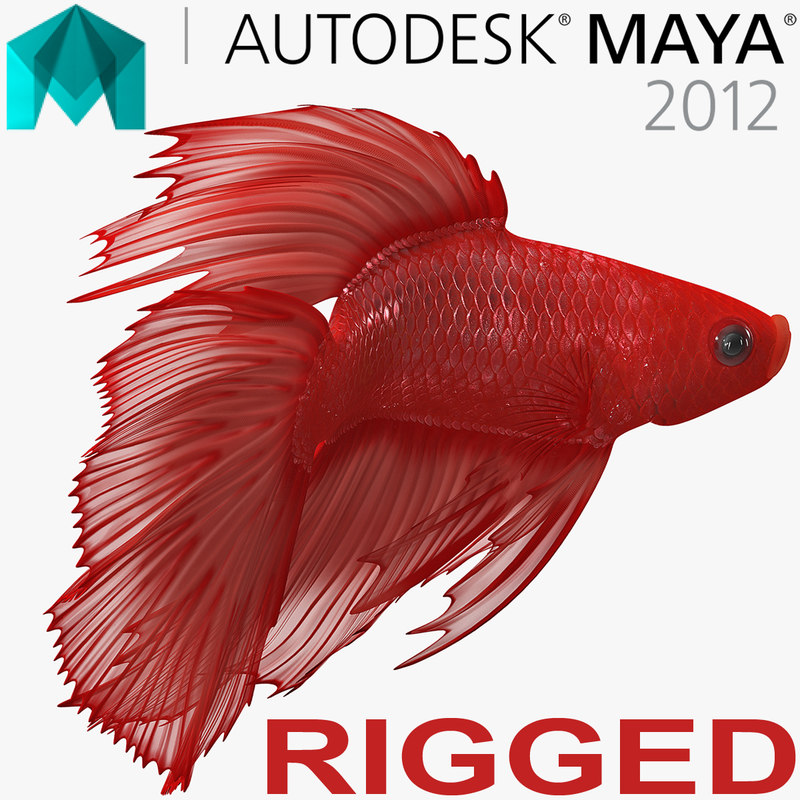 red crowntail betta fish 3D model