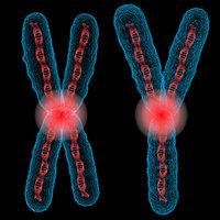 chromosome x y 3D model