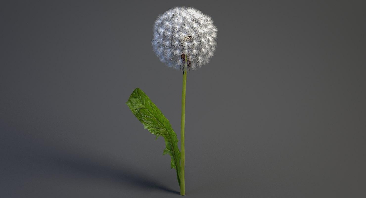 realistic dandelion 3D