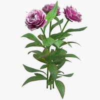 realistic peony flower 3D