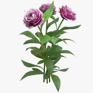 realistic peony flower 3D