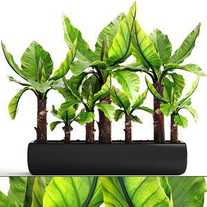 3D tropical plant typhonodorum lindleyanum model