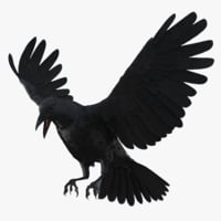 3D crow rigged model