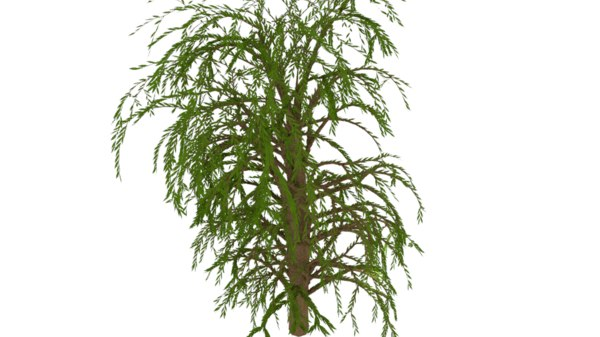 willow tree 3D model