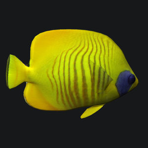 cheek butterfly fish 3D