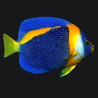 Angel Fish Queen