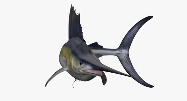 sailfish rig 3D model